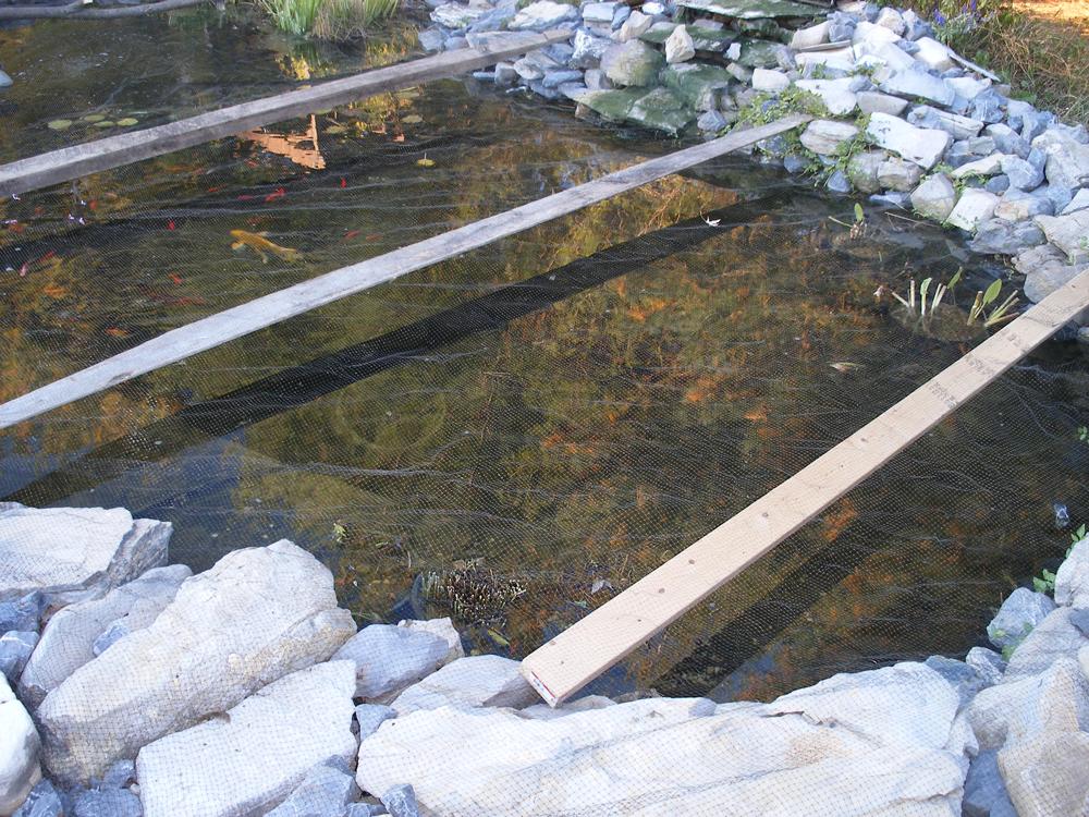 Best Fish Pond Design Fish Pond Design